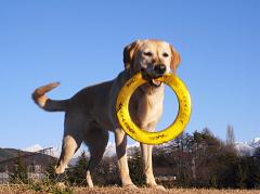 名誉顧問犬のジェーン